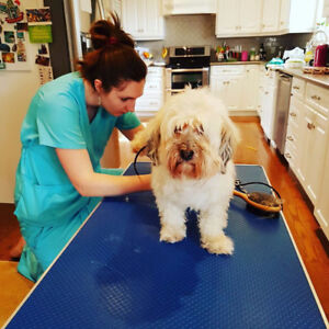 Well Groomed Mobile,  Mobile Pet Grooming, In Home Dog Grooming