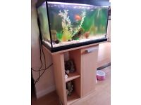 Fishtank, Stand and Fish