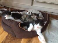 Kittens x 3