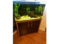 Aqua one fish tank aquariu