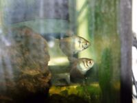 freshwater tropical fish for sale