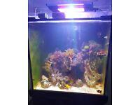 Aqua reef 275 complete marine fish tank