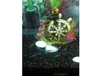 Small guppies for sale