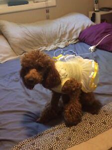 Dog dress or cat dress