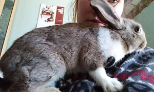 Bunny for sale