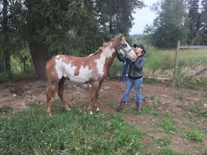Two year old mare