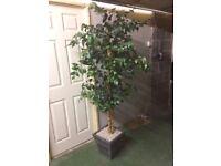 X2 artificial indoor/outdoor plants
