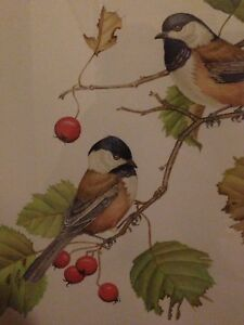 Amazing chickadee bird watercolour painting art erotica