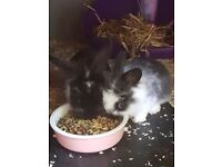 Cute Baby Rabbits For Sale