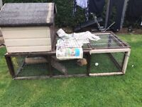 Two male Guinea Pigs - £30