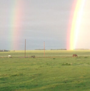 Camrose area acreage.