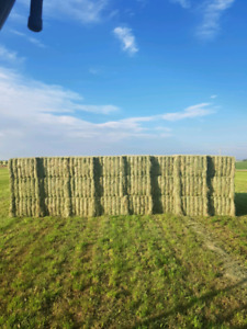 2nd Cut Hay