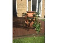 Large Garden Strawberry Pot