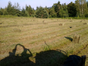 Square bails of hay