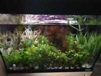 Tropical Live Plants