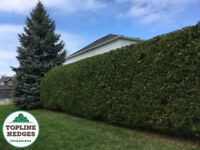Professional and Affordable Cedar Hedge Trimming