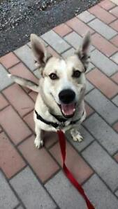 """Young Male Dog - Mixed Breed: """"Vlad"""""""