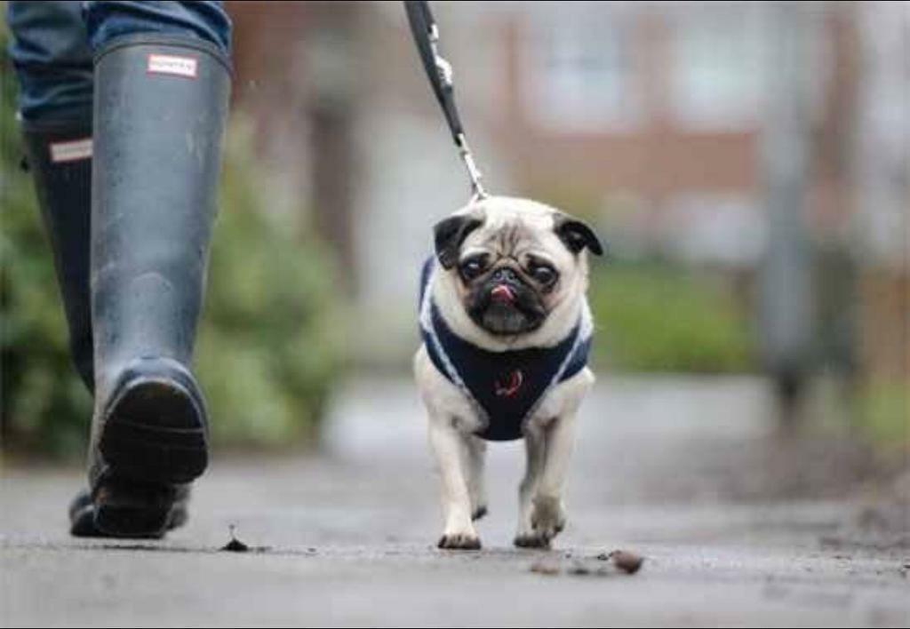 South/Central Manchester Dog Walking & Pet Services