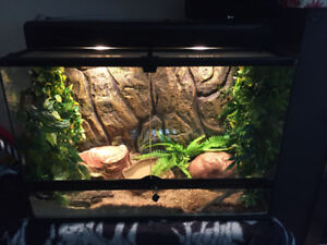 Ball Python and lots of accessories