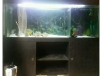 5 ft long fish tank plus lid and stand