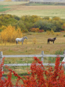 Room for Rent on Farm - Horses Welcome