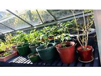2 x Greenhouse potting bench grey