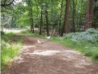 Ringwood & Fordingbridge Dog Walker