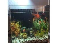 Aqua one 55lts fish tank