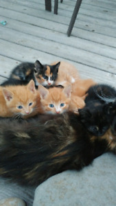 Polydactyl kittens 6 and 7 toe. Some regular...11 to choose from