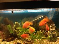 Forefoot fish tank for sale with stand black