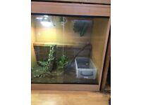 3x3x2 arboreal vivarium
