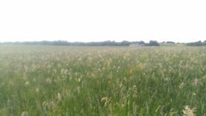 Ready to develop acreage 10 minutes from Wainwright