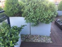 Large plant containers / planters (used) for patio/garden/terrace (14) painted steel various sizes