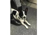 Summer dog walker/sitter in Ealing