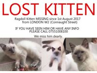 Lost Missing Ragdoll Kitten W2 London
