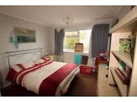 Large Double room in pet friendly houseshare