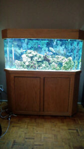 Healthy Functioning Salt Water Aquarium System