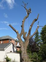 Tree removal,stumps,hedges woodchipping
