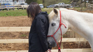 Equine Assisted Learning - Is this Your Calling?