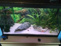 128l fish tank with led colour changing led lights