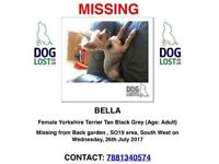 Dog lost missing :(