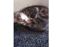 8 week old kitties