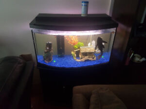 40 gallon tank and stand