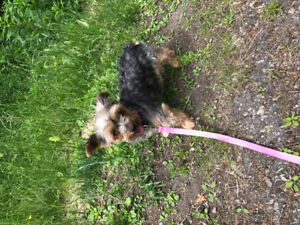Rehoming a little dog please contact
