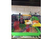 Dwarf hamster, cage, bedding & accessories.