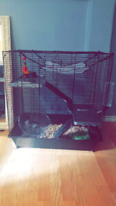 3 Storey Rat Cage + 2 Young Female Rats