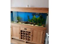 Aqua Oak 160cm Wine Rack Aquarium 330L - Maidenhead Aquatics