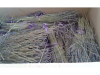 Large box of dried lavender