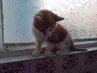2 little beautiful kittens for sale