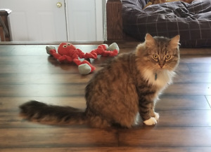 4yo Cat looking for loving home